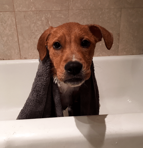This is my favorite picture ever. Ellie loves the bath.