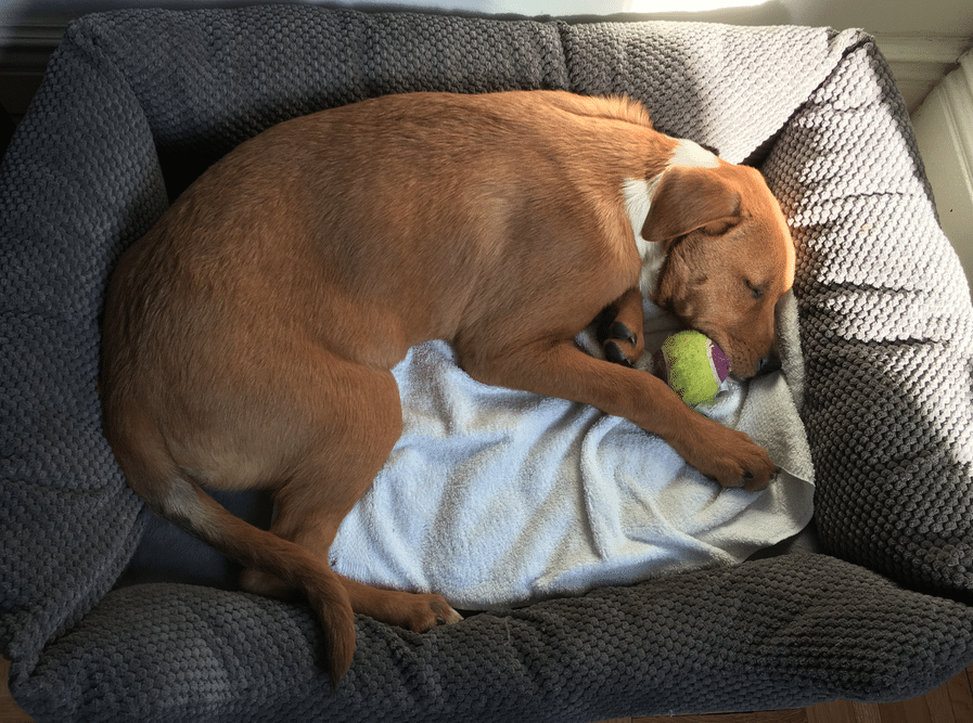 She fell asleep with her ball!